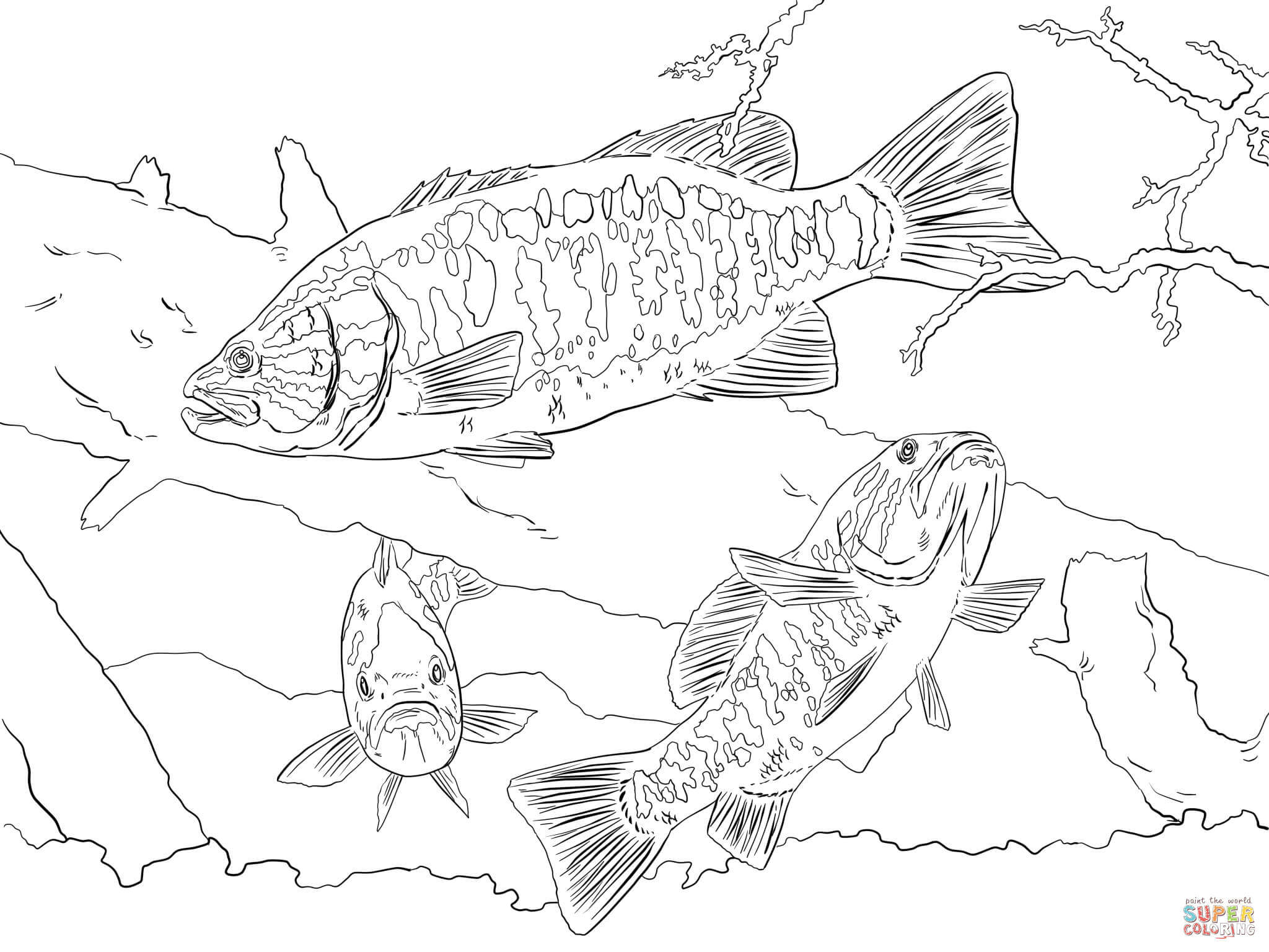 largemouth bass coloring page coloring pages