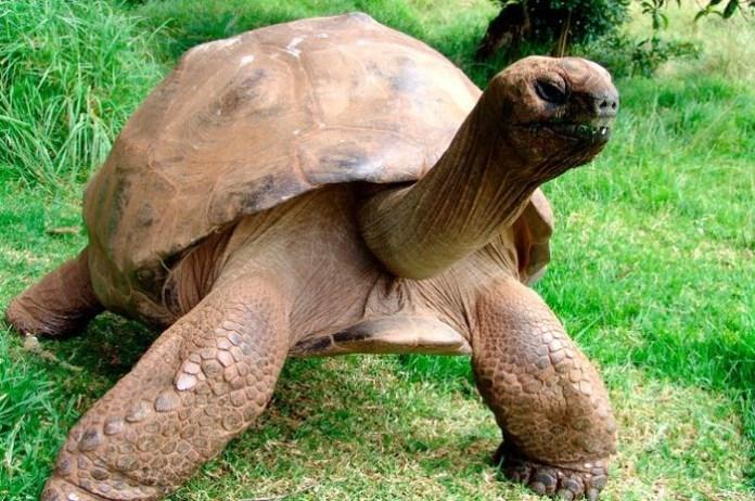 jonathan-tartaruga