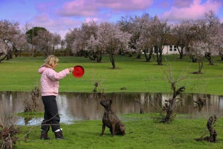 dog playing with frisbee image