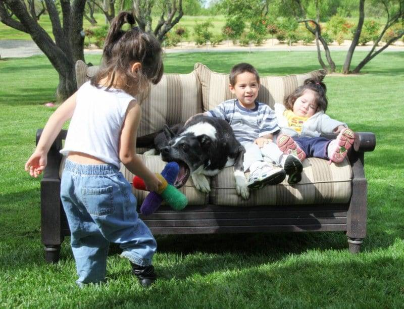 children and dogs image