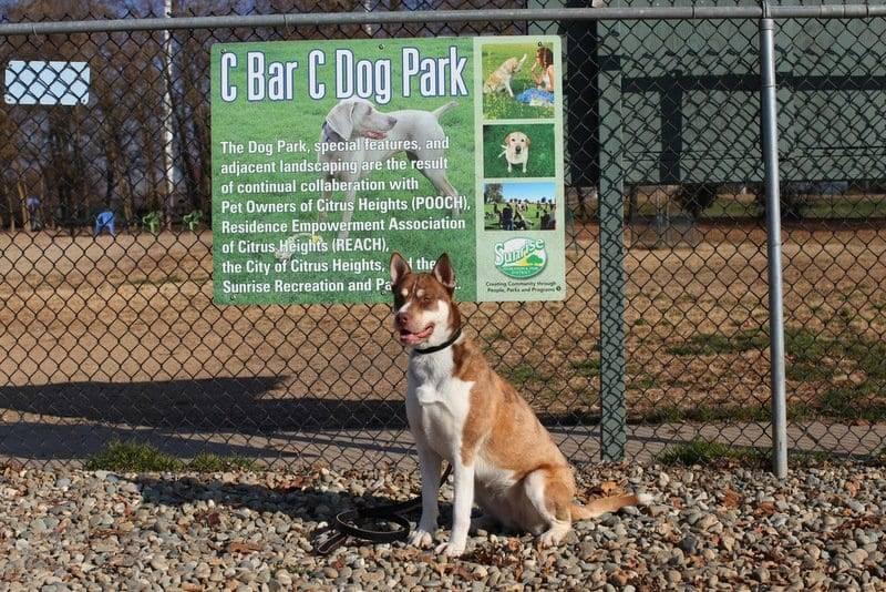 C Bar C Dog Park image
