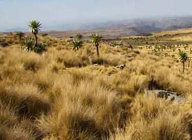 high plains of Ethiopia