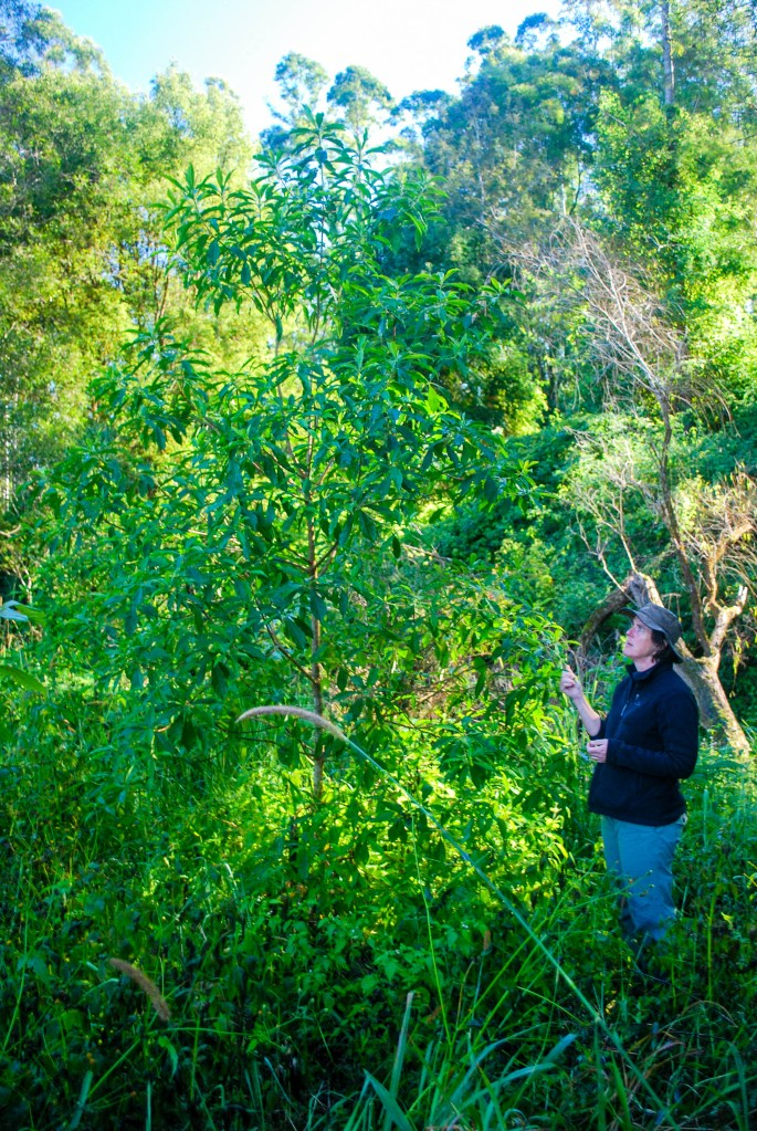 Environmental works and habitat