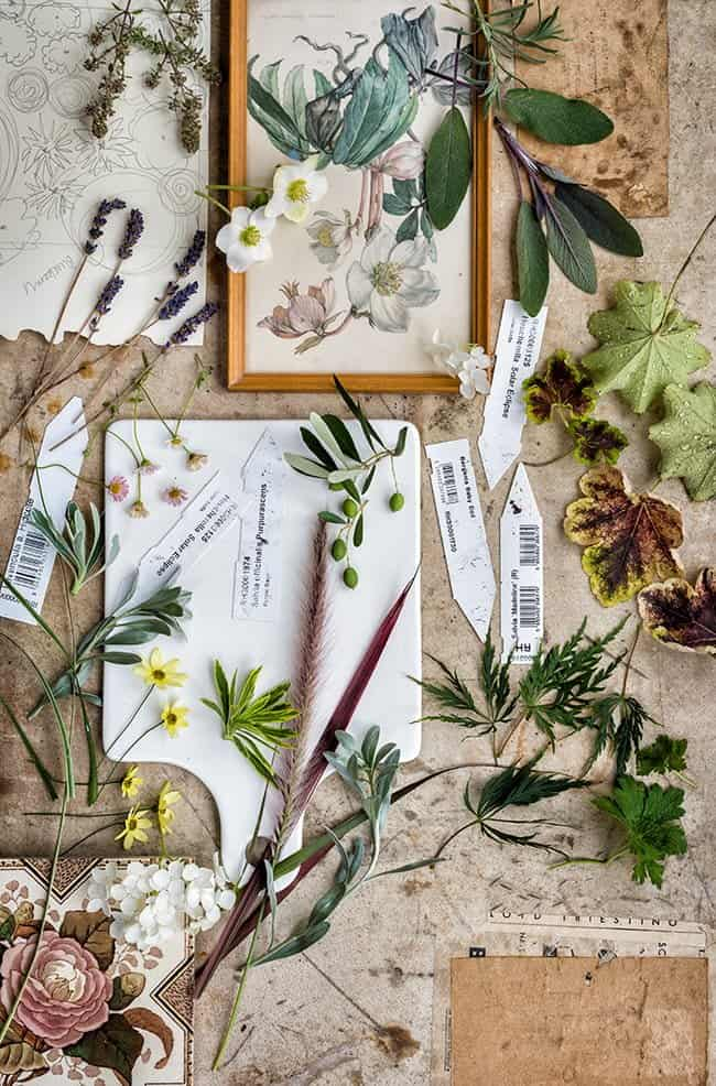 Vintage plant and gardening flatlay - photography | Supergolden Bakes