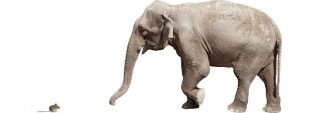 mouse_elephant_wide