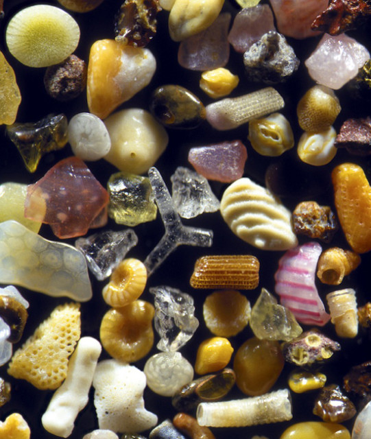 Sand grains from Maui, HawaiiMagnified 125x
