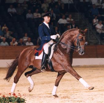 Image result for wolkentanz stallion