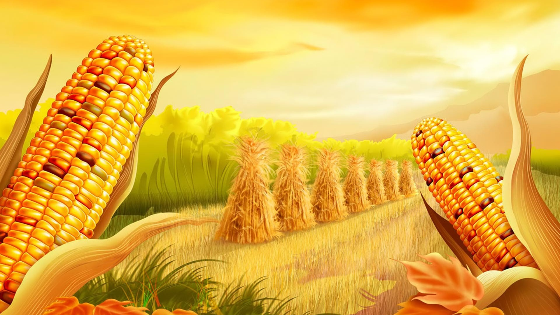 Corn Ready To Harvest Golden HD Wallpaper