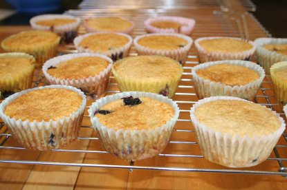 blueberry-oat-bran-muffins