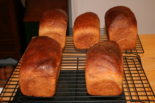 five 1.5 lb loaves