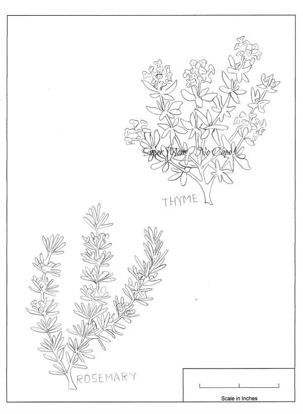 Vintage Workbasket embroidery pattern for Rosemary and Thyme