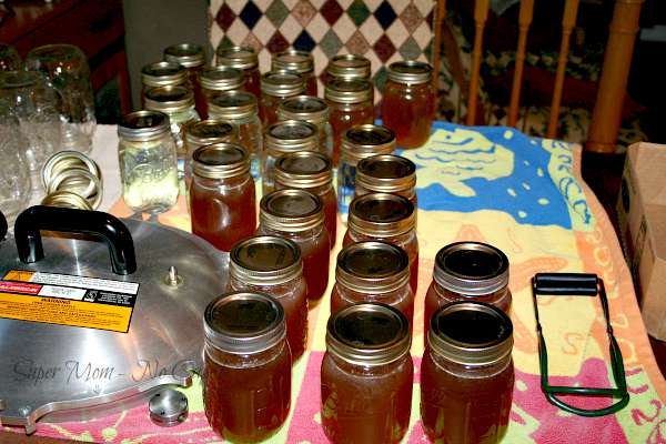 Pints jars of homemade chicken broth