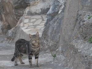 Santa Domenica Talao Kitties 2