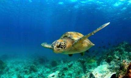 Maldives Underwater Festival