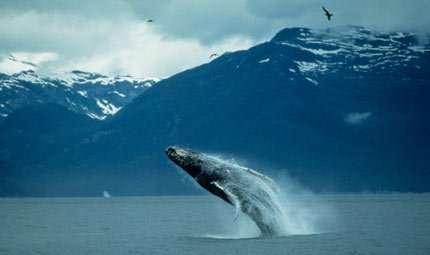 Francia e USA unite per le balene