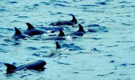 Santuario dei Cetacei: rischio inquinamento