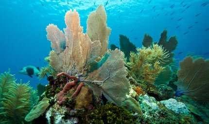 Entro un secolo i coralli potrebbero scomparire