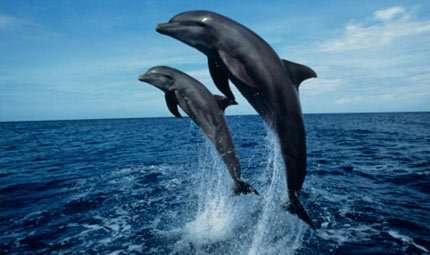 Lo stress dei delfini