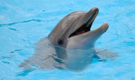 Parlare con i delfini