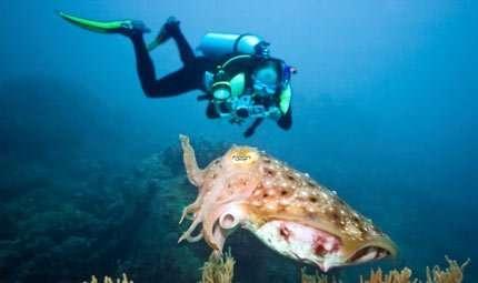 Foto subacquee in mostra a Porto Selvaggio