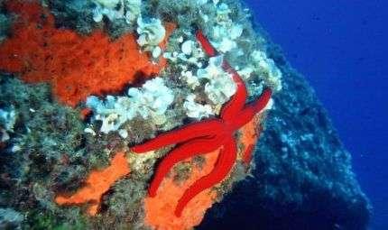 Fotografia all'Elba per Subacquatica