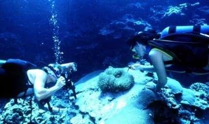 Itinerario subacqueo a Porticello