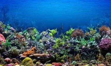 Da Milano un aiuto per i coralli delle Maldive