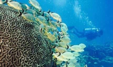 La valenza emotiva della subacquea