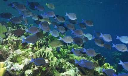 Un pesce robot per salvare l'ambiente