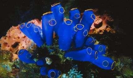 POSEIDONinFLORA 2, fotografia subacquea a Terlizzi