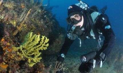 Reef Check, subacquei in azione a Portofino