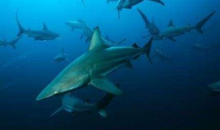Matrimonio in gabbia con gli squali