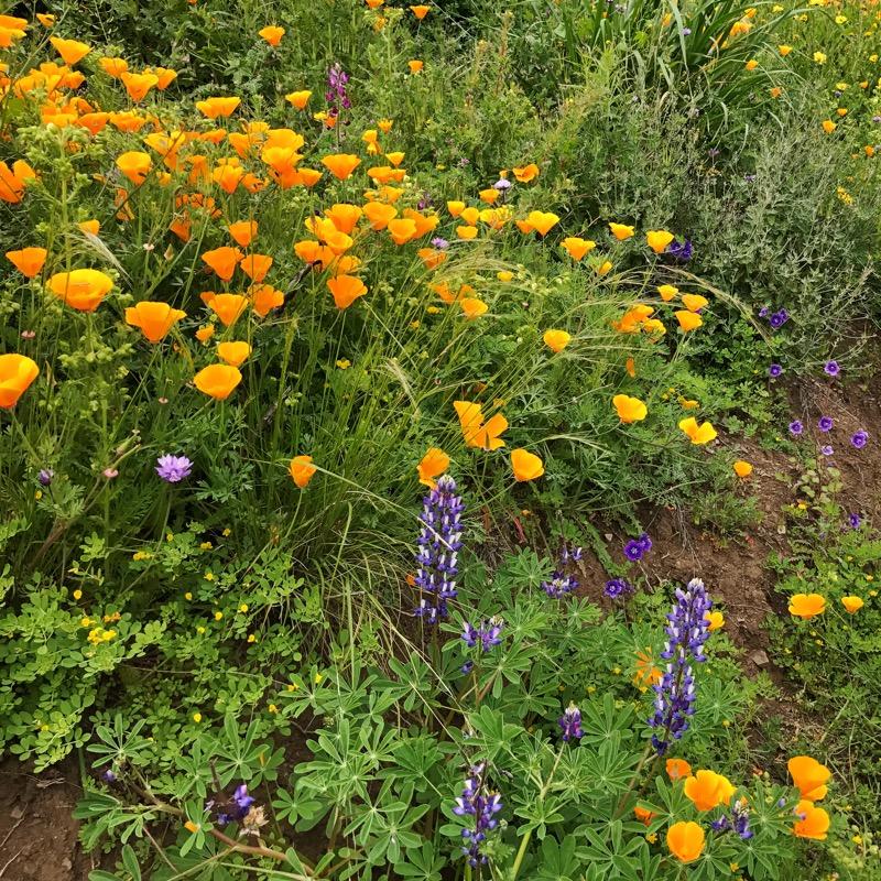 Wildflowers Along The Backbone NRT