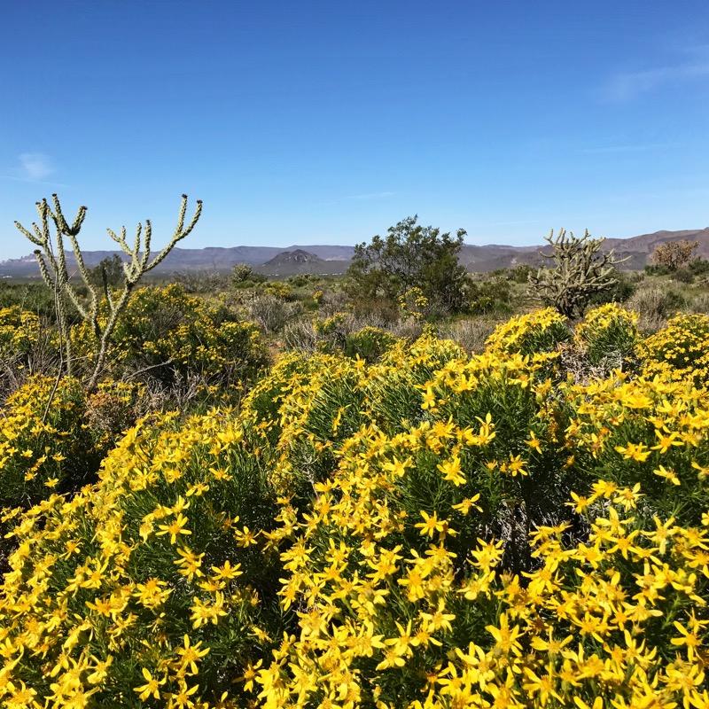 Spring Has Sprung Near Chloride, AZ