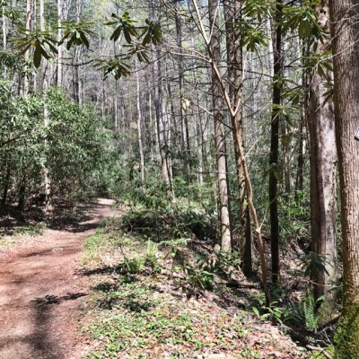 Chattahoochee National Forest, Conasauga Ranger District