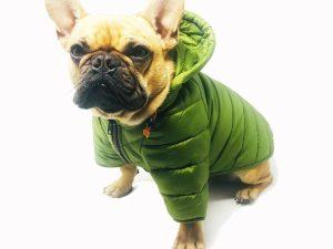 Puffer Dog Jacket