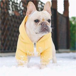 Beache Dog Hoodie