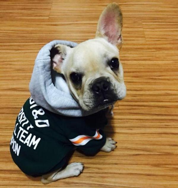 All-Pawmerican Dog Hoodie