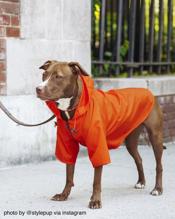 Nylon Dog Rainbreaker