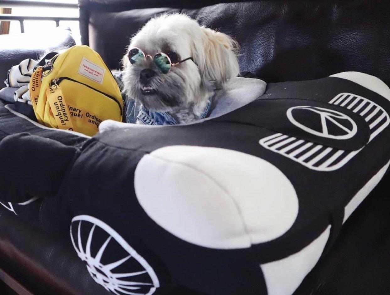 Benzito Dog Bed