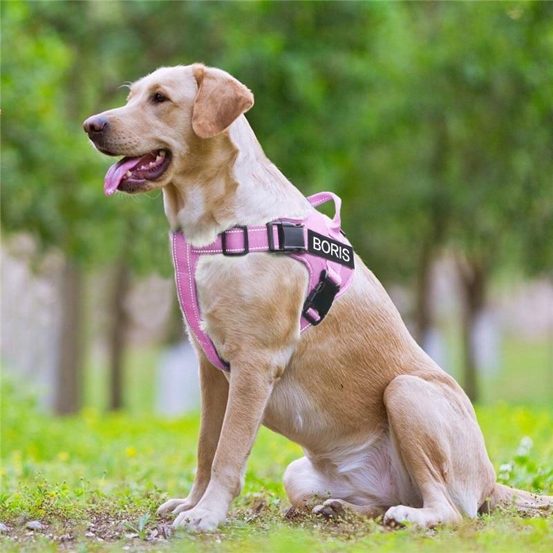 Custom ID No Pull Dog Harness