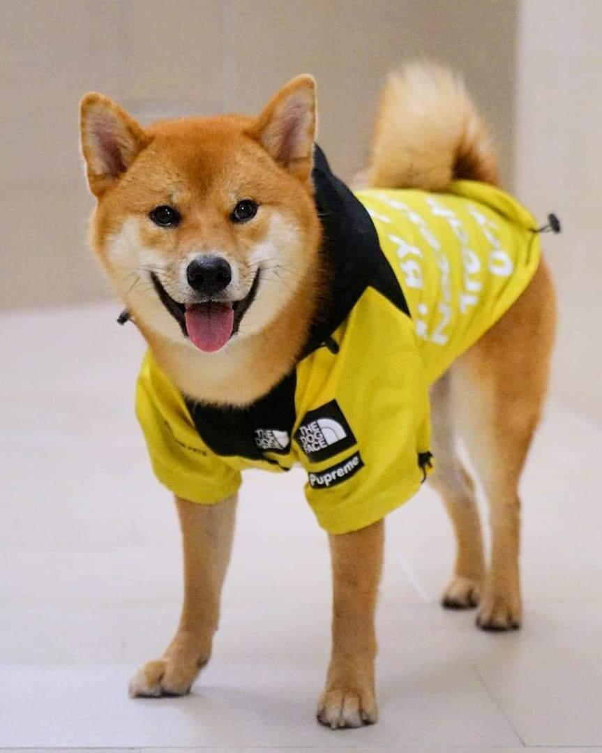 B.A.T.N. Dog Windbreaker