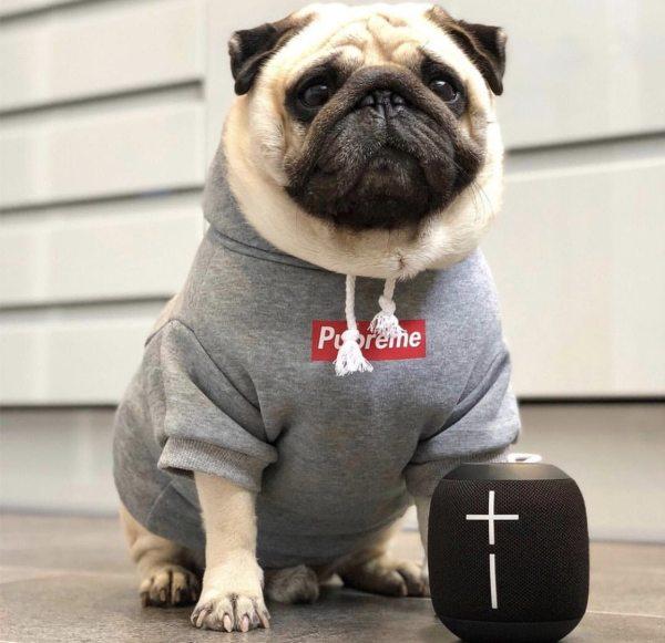 Pupreme Classic Dog Hoodie - Gray