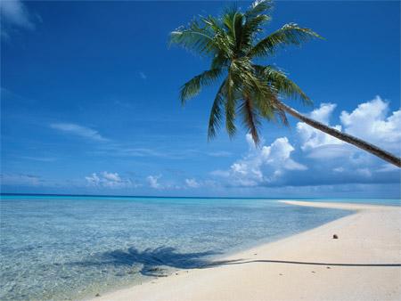 a l ombre d un palmier photo de plage