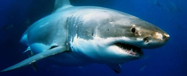 Shark Diving best locations