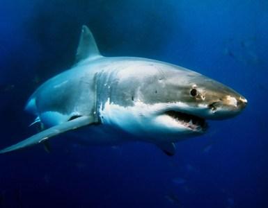 Shark Diving best locations