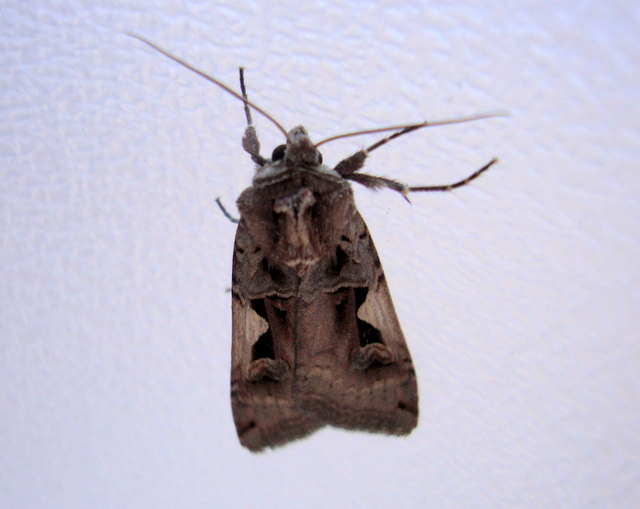 Moths In Bedroom Memsaheb Net. moths in my bedroom   Scifihits com