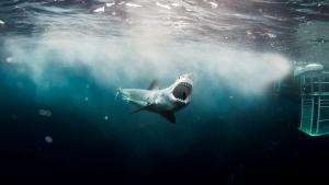 Safety Not Guaranteed_Shark