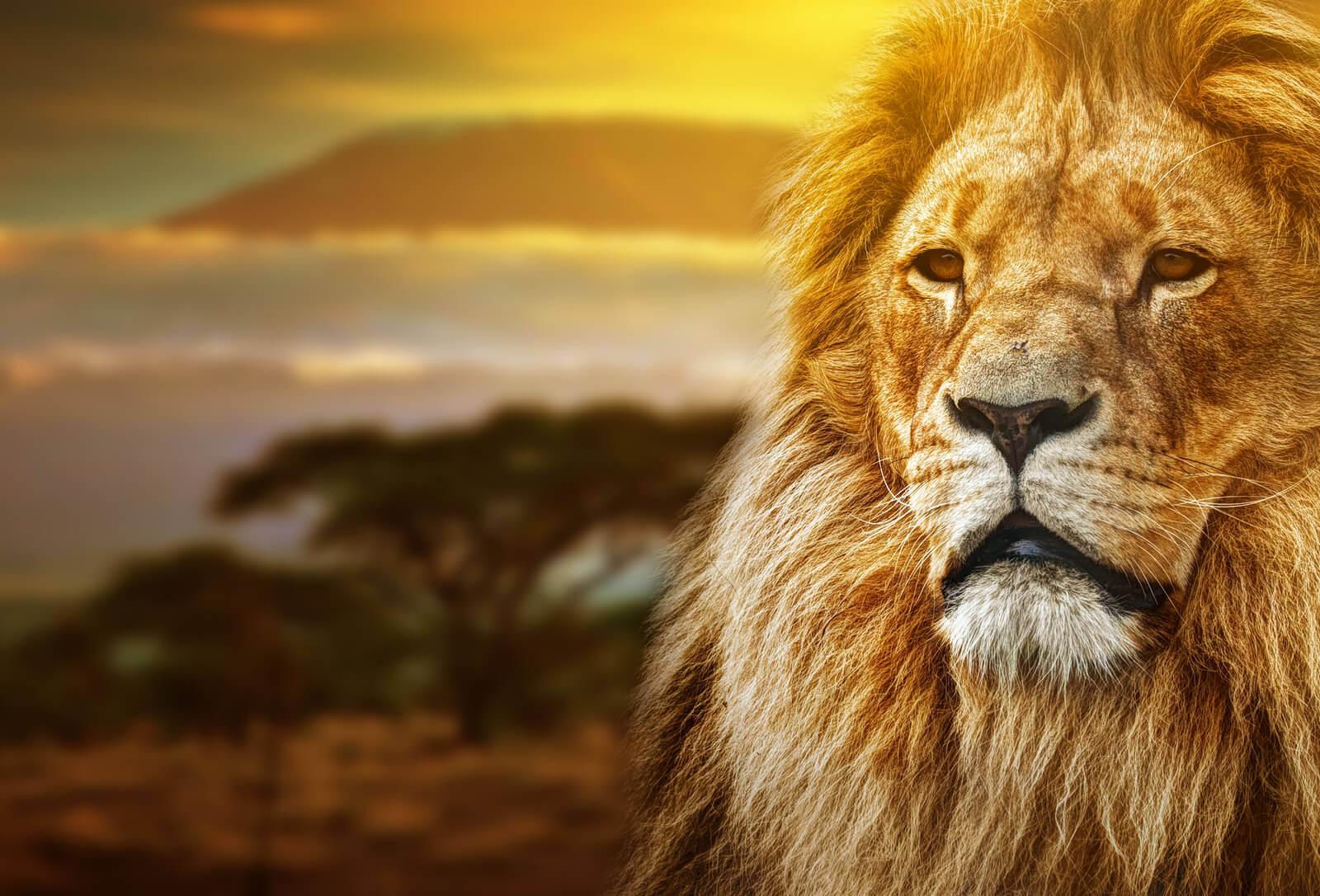 Lions Resources Surfnetkids