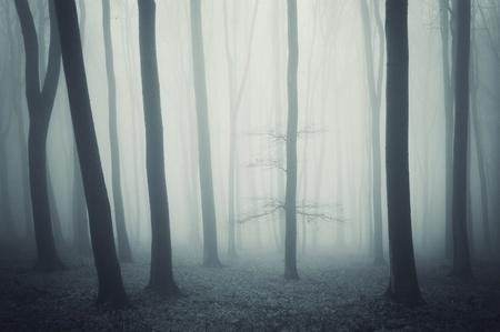 ghosts on Roanoke Island